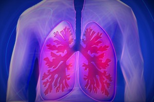 lungs_upper-body-944557_1280